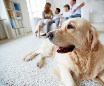 Pet Urine and Odor Control
